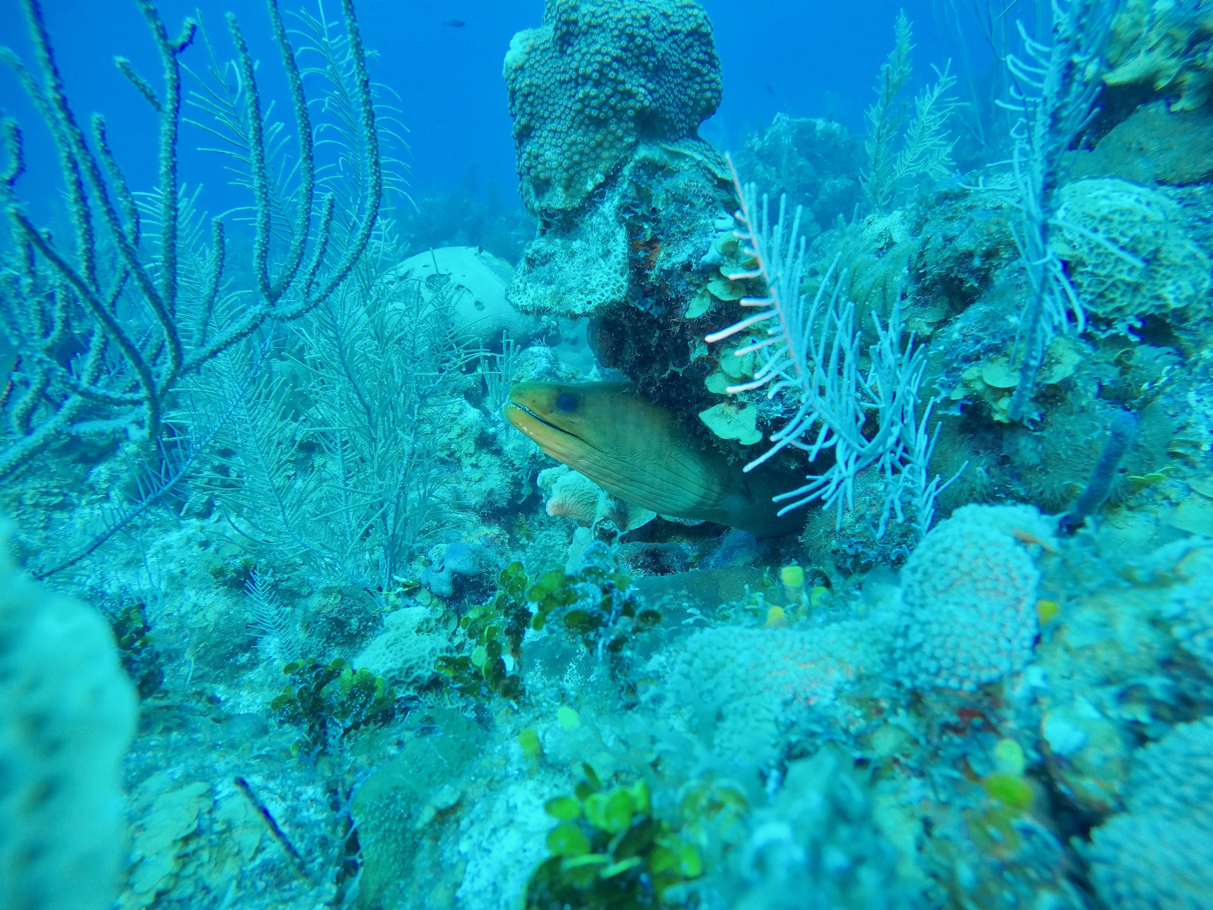 underwater photograph of eel in coral unrestored