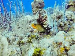 underwater photograph of eel in coral - restored